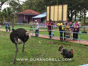 Ladang Ostrich, Padang Besar Perlis